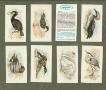 Collectable cigarette cards set  British Birds, Robin, Magpie, etc